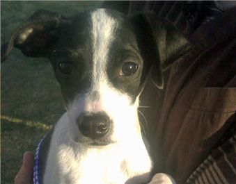 Трехмесячный щенок вернулся к жизни после усыпления