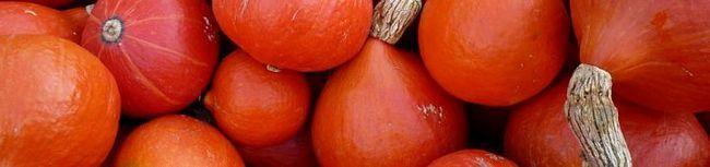 Hokkaido bundeve, i druge poznate povrće - biraju najbolje sorte u Ruskoj Federaciji!