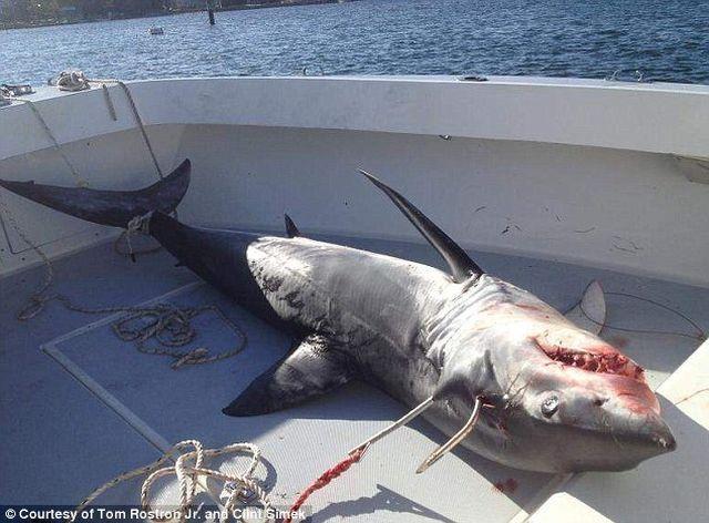 Shark je skočila u čamac za ribare u obali Sjedinjenih Američkih Država (Foto: usatoday.com)