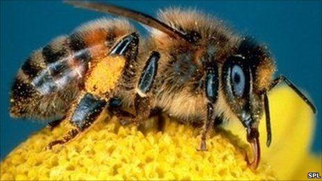 V pamäti včely lepšie v dopoludňajších hodinách