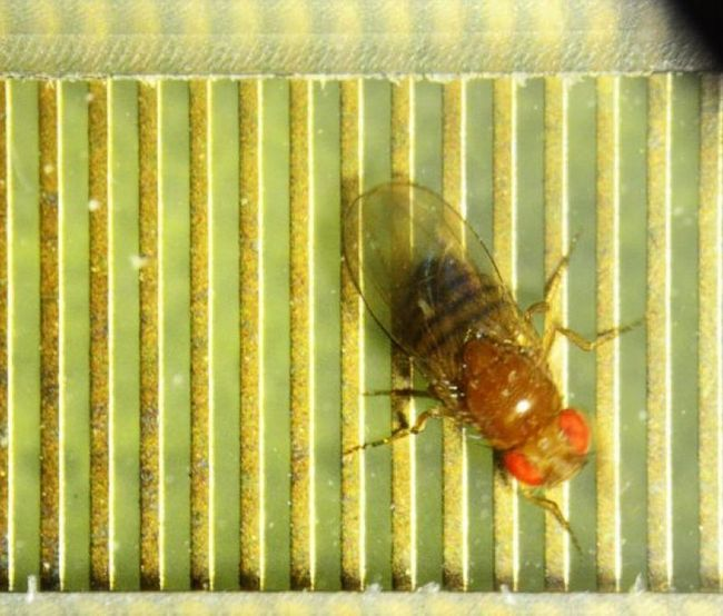У насекомых обнаружили признаки интеллекта