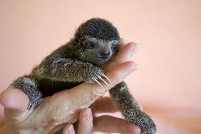 Убежище для ленивцев в Коста-Рика