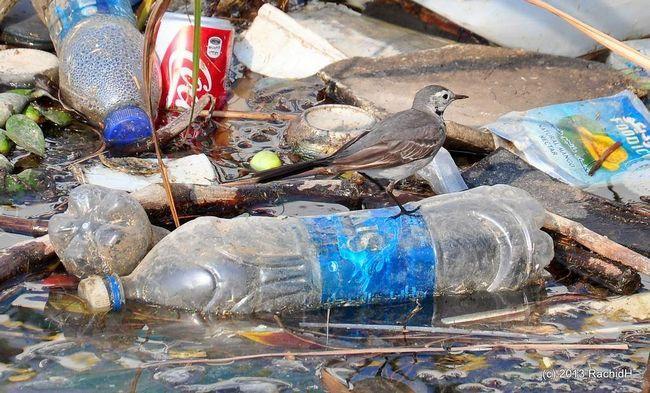 Ptice u 2050. će patiti od plastičnog otpada.