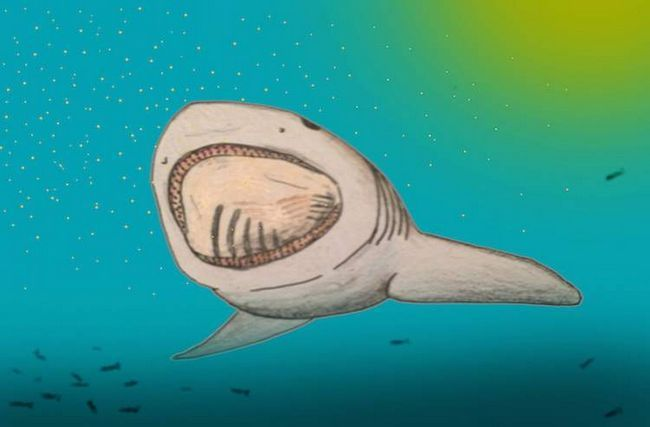 Найдена акула с гигантским ртом.