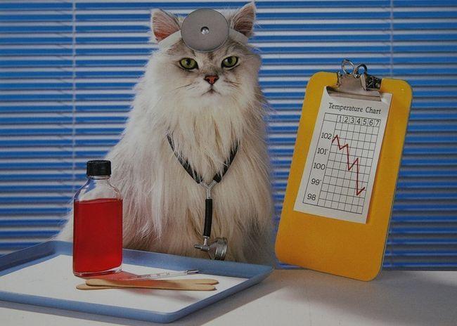 Naučnici su pronašli dokaze koji su u stanju da ozdravi ljudi mačke.