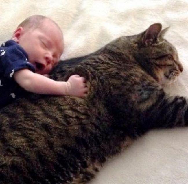 Ljudi koji žive sa mačkom u ranoj dobi imaju mnogo manje šanse znatno veći očekivanog trajanja života i pate od raznih bolesti, uključujući i alergije.