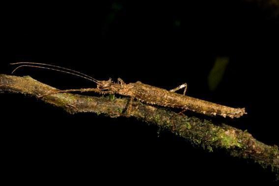 Ученые нашли в лесах эквадора новые виды живых
