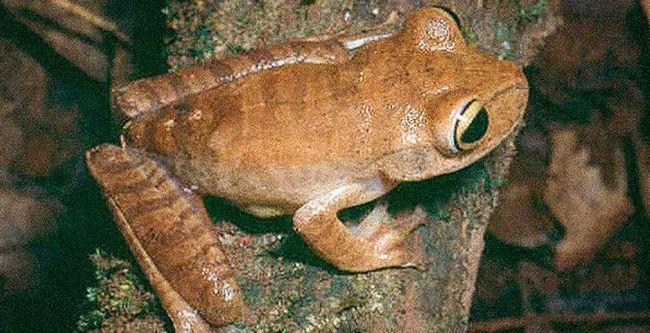 Ученые назвали 15 видов животных с самыми низкими шансами на выживание