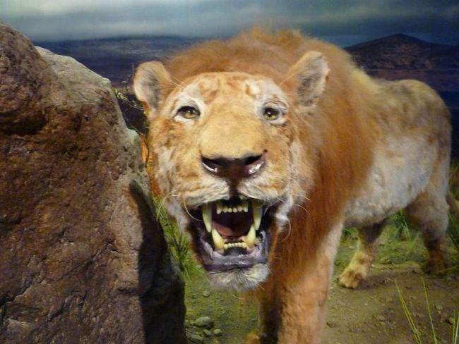 U Jakutiji, pronašli smo ostatke pećinski lav.
