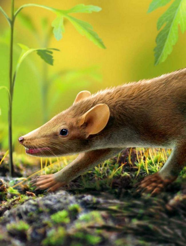 Ученые: первобытная мышь была покрыта иголками, как у дикобраза