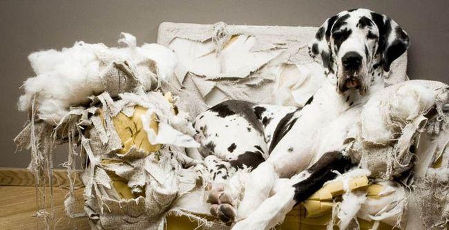 Ученые развенчали миф о собачьей совести