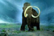 Grupa australijskih istraživača sa Sveučilišta u Adelaide u suradnji sa svojim kanadskim kolegama sa Univerziteta Manitoba otkrili da su sadržani u mamuta krvi