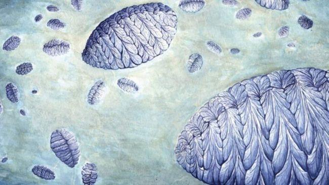 Naučnici su otkrili način reprodukcije drevnih životinja.