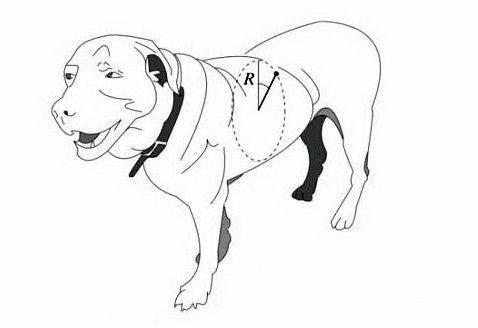 Учёные измерили предел вращения мокрых собак