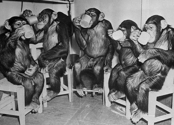 Přestože je šimpanz mozek je dvakrát nižší než u lidí, vědci se domnívají, že hlavní rozdíly mezi našimi mozky z opice - spíše kvalitativní než kvantitativní.