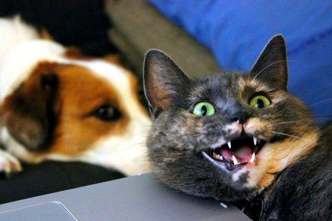 Удачная фотография кошки неожиданно помогла собрать деньги для приютов