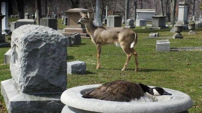 Удивительная дружба разных видов животных