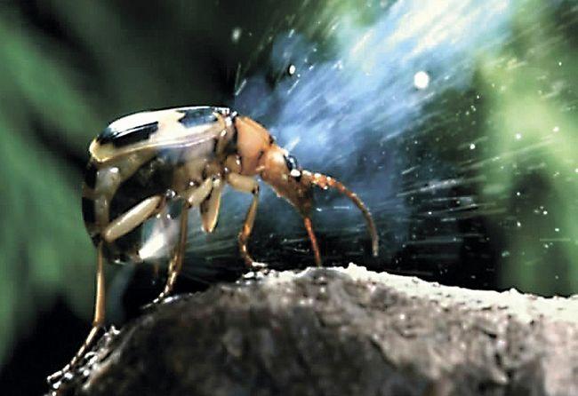Удивительные факты о необычных созданиях природы