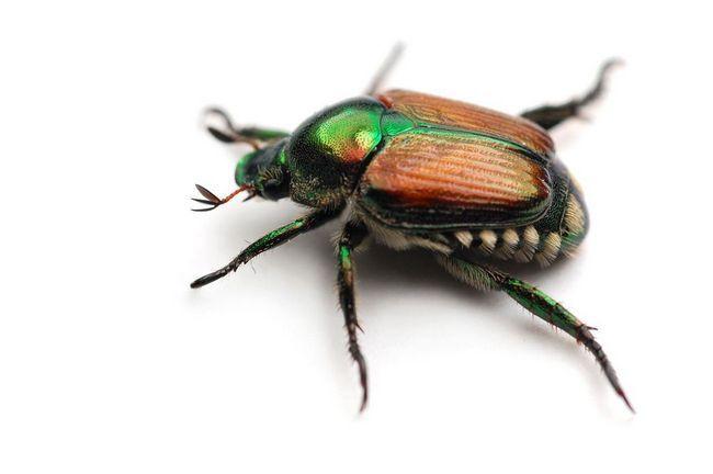 Удивительный мир жуков