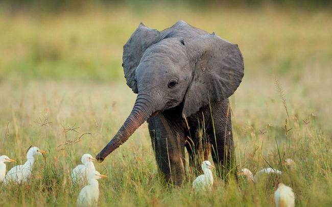 Životinja Prijateljstvo ne poznaje granice, jer razumijevanje i sklad vlada u njihovom svijetu.