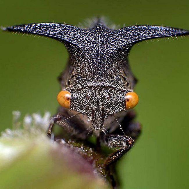 Čudovišta nisu samo u filmovima: The Amazing insekata.