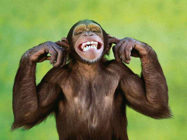 Životinje imaju smisla za humor!