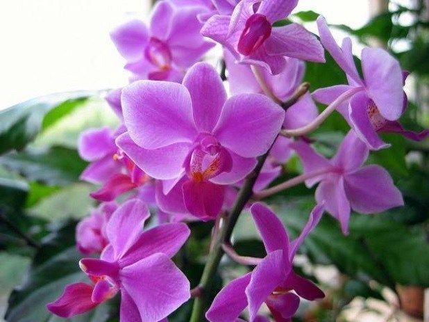 Gnojivo za cvjetanje orhideje