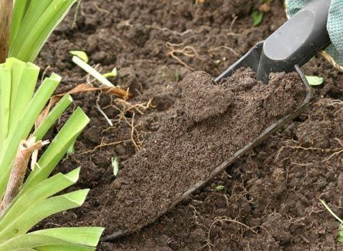Удобряем почву птичьим пометом