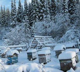 Briga za pčele u zimskom