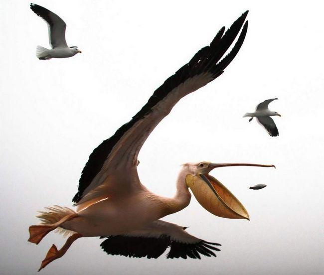 U Zatoka je ubijen od strane nepoznatih ptica.