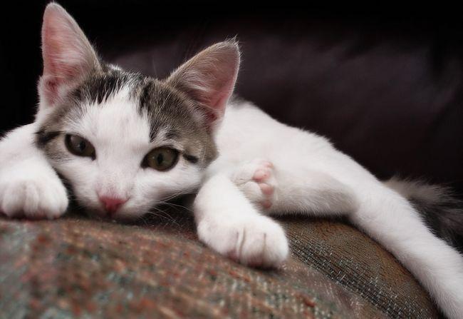 FITEKS umirujuće kapi za mačke: instrukcije, recenzije