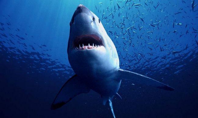 Акула напала на 52-летнего серфера.