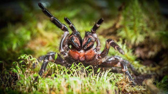 Austrálie nalezl zcela nové druhy pavouků