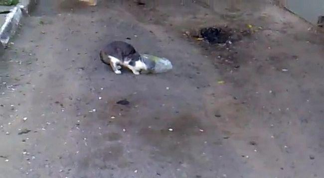 U regiji Belgorod mačka zaglavi u paketu.