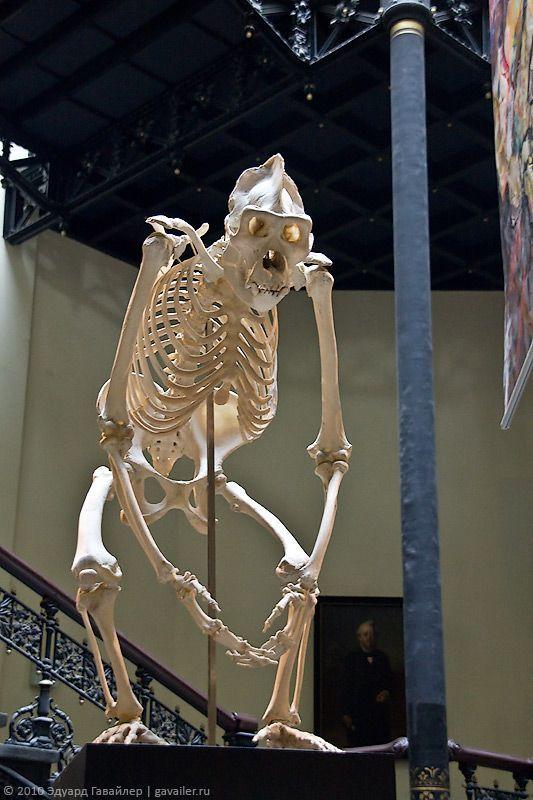 Berlinski Museum of Natural History (Muzej f r Naturkunde)