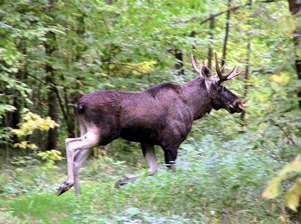jelena je bio na Masherov Avenue, 300 metara od stela