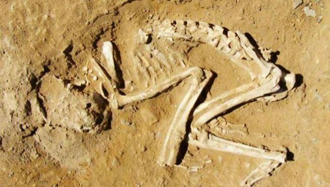 В древнем египте экзотические животные приносились в жертву после смерти их хозяина