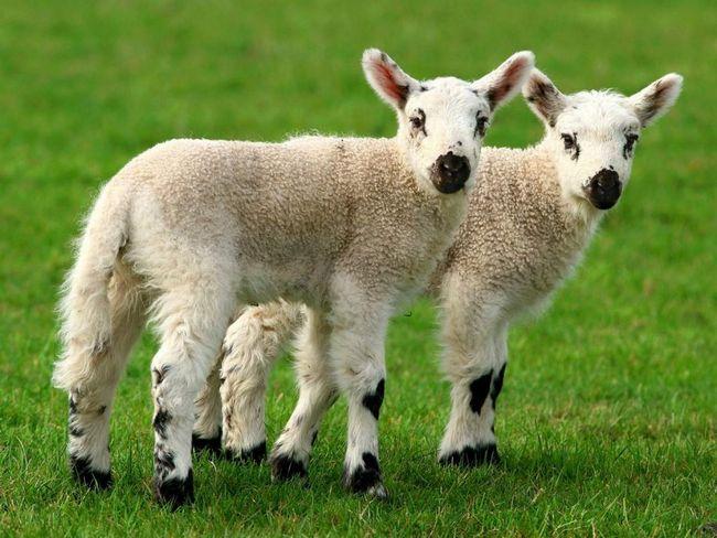 Evropa přestane klonování zvířat.