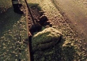 В германии спаривающиеся подёнки стали угрозой дорожному движению