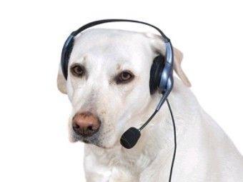 В германии запертая в доме собака вызвала полицию
