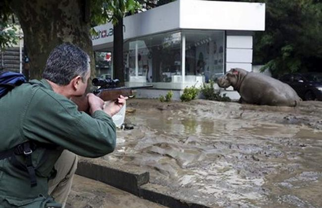 Tbilisi zbog poplava pobegao zoo životinje.