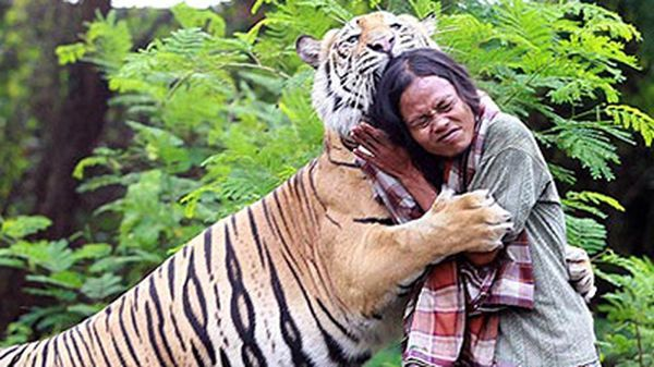 В индонезии мужчина приручил 150-кг тигра