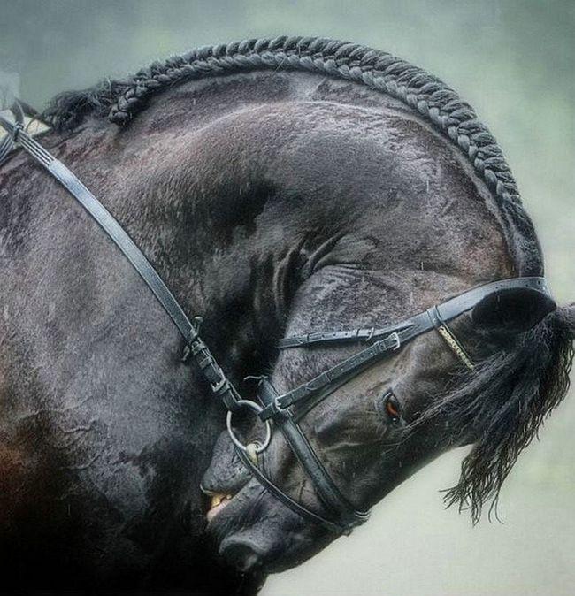 В иране обнаружены старейшие останки каспийской лошади
