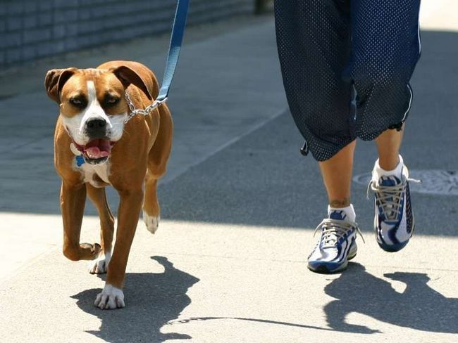 В иране собаководов будут наказывать плетями и штрафами