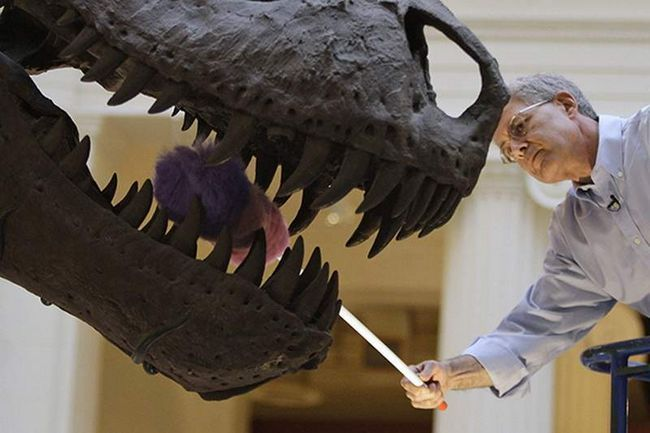 U Japanu, pronađena zuba od najvećih Tyrannosaurus Rex.