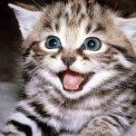 В каких цветах видит привычный мир ваша кошка?