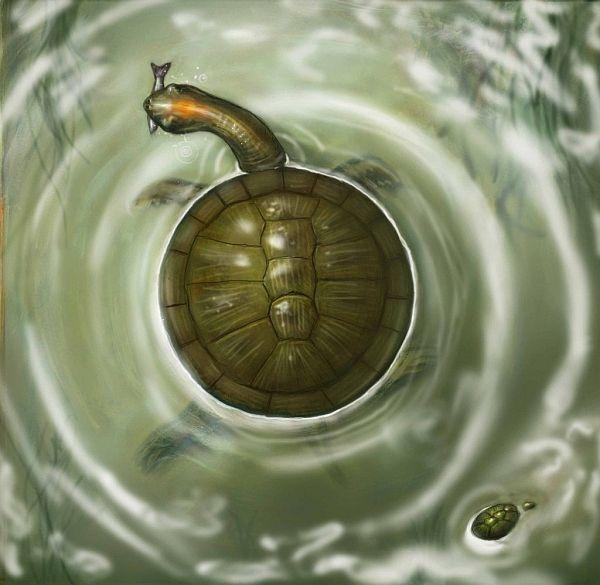 В колумбии найдены останки древней круглой черепахи
