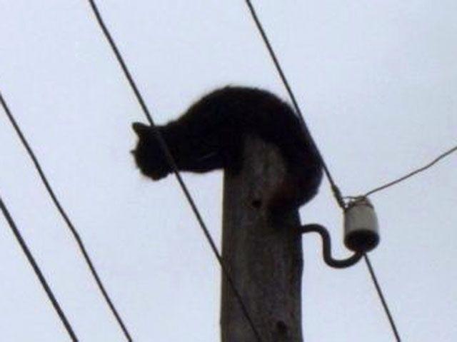 В коми энергетики спасли мокрую кошку, которая три дня сидела под током