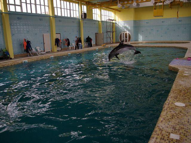 В крыму боевые дельфины вмс украины устроили побег