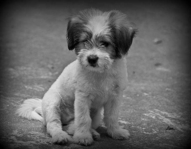 Pijan veterinar brutalno ubio štene u blizini igrališta.
